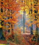 woods-1072819_1280
